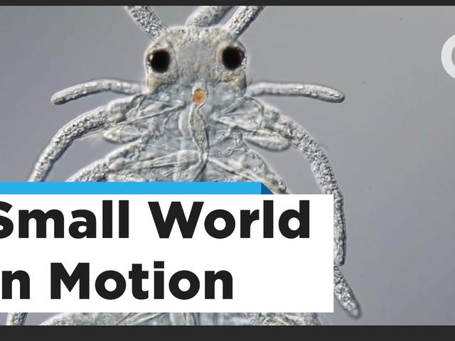 Award-Winning Microscopic Video of Growing Zebrafish Embryos Is Mesmerizing