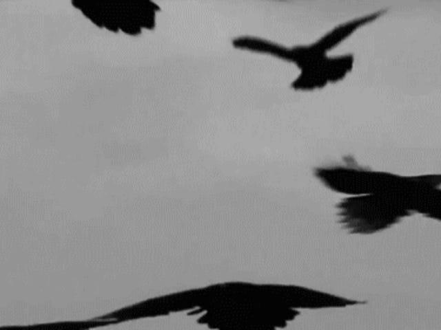 Bay thấp, con quạ ...
