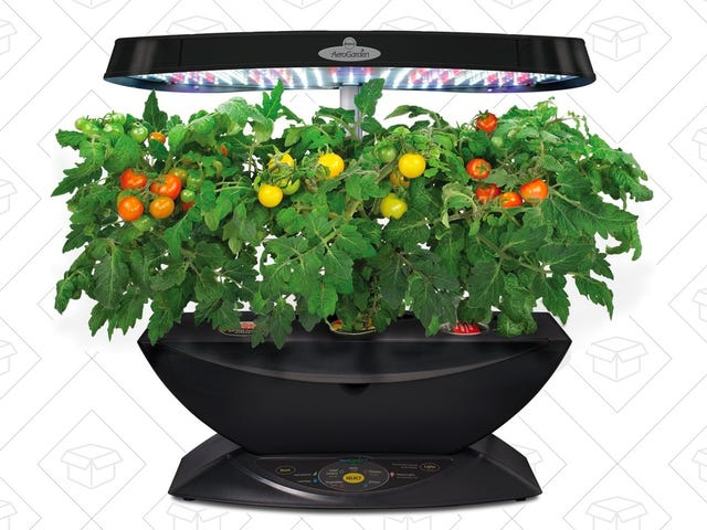 Grow Your Own Herbs and Vegetables In This Discounted AeroGarden