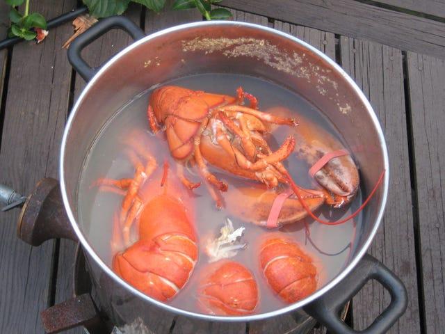 La costumbre de cocinar vivas a las langostas ไม่มี tiene nada que ver con la gastronomía