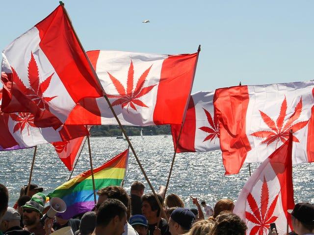 Làm thế nào để mua Weed ở Canada Bây giờ đó là hợp pháp