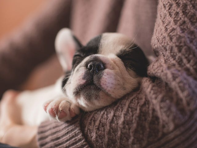 Even Adults Sleep Better After Being Rocked to Sleep