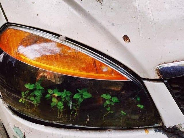 Next gen Nissan Leaf?