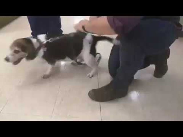 Excited dog sounds like a TIE fighter