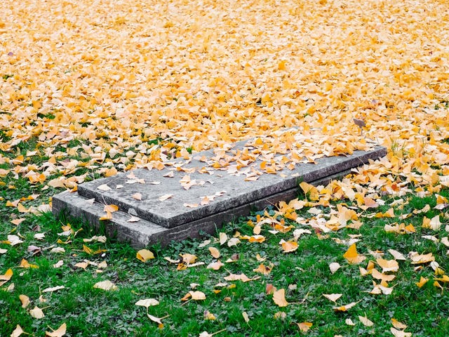Here Are All the Ways You Can (Legally) Dispose of a Dead Body