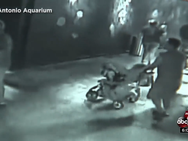 Incompetent Thieves Steal Shark From San Antonio Aquarium by Disguising It as a Baby