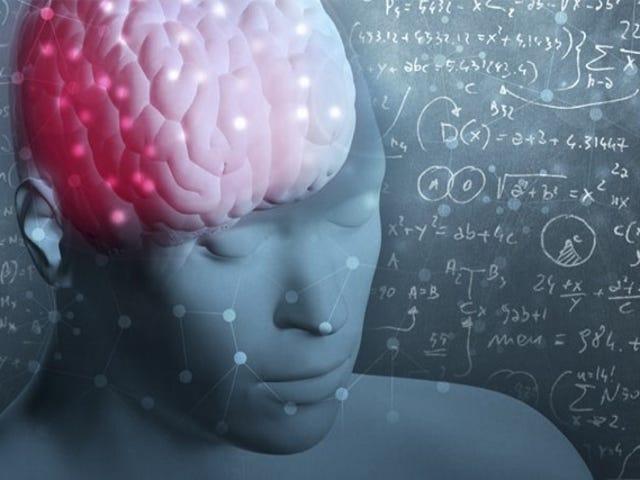Disse er de fire trin i din hjerne på matematik
