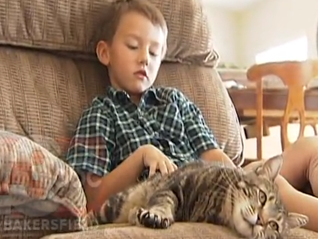 Amazing Cat That Rescued Boy Gives First Television Interview