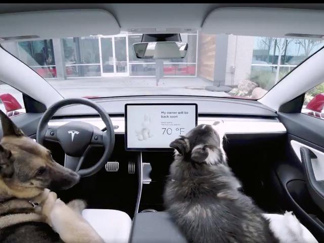El nuevo 'Modo Perro' de Tesla mantendrá fresco a tu cachorro mientras estás fuera del auto