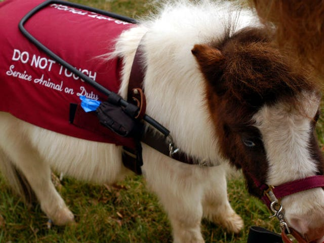 Thankfully, You Can Still Bring Your Miniature Horse on a Southwest Flight