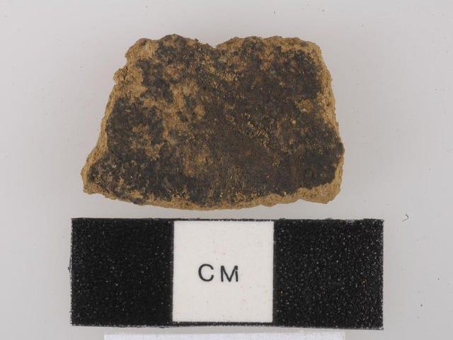 考古学者は秋にちょうど時間内にナツメグ辛辣な食べ物の最も古い例を見つける