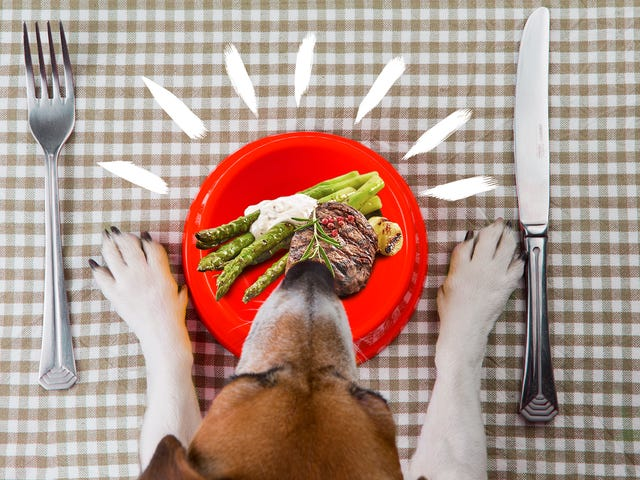 We love our dogs. Should we cook for them?