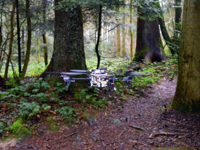 Diese Rettungsdrohnen durchsuchen Waldwege wie Roboter-Waldläufer