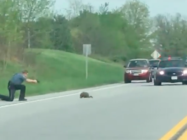 Vile Beast Groundhog Shot To Death By Valiant Officer of The Law
