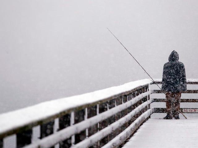 Gubernur Washington Mengisytiharkan Kecemasan Sebagai Penyokong Salju Besar untuk Tahun Ini