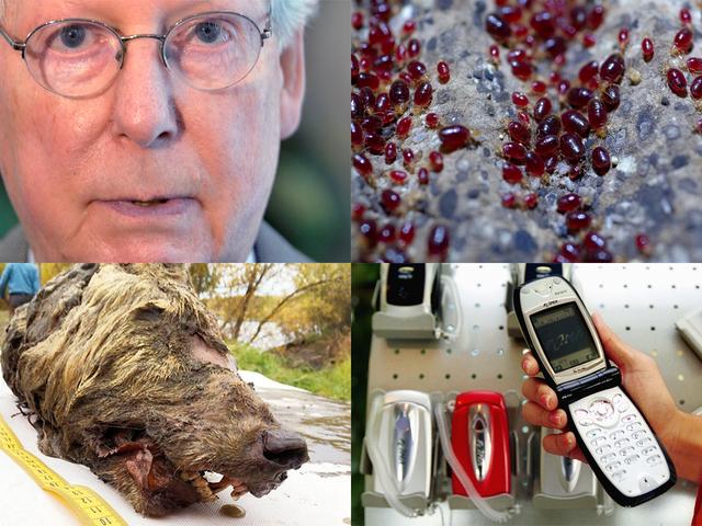 Veren juhlat, käteisvarastot ja Quantum Computing: viikon parhaat Gizmodo-tarinat