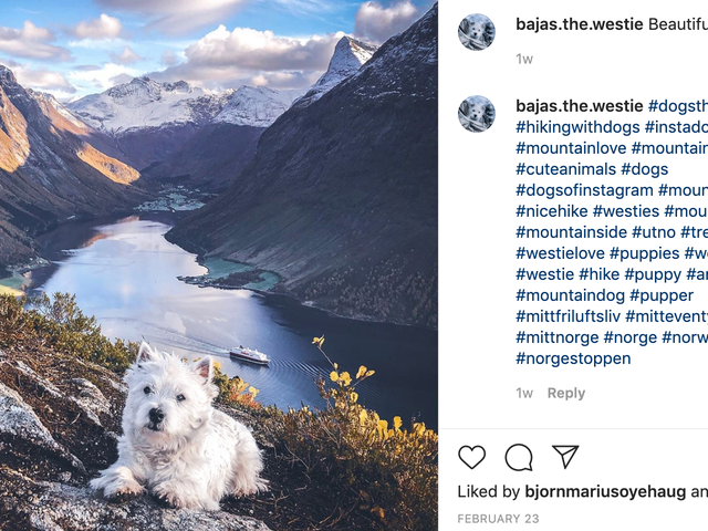 A Brief Interview With a Man Who Takes Majestic Photos of His Tiny, Impossibly Athletic Dog