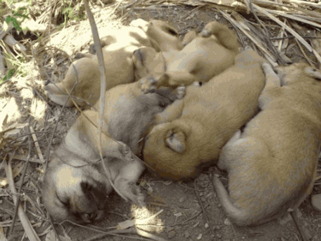 Stop What You're Doing And Watch This 11-Hour Video Of Puppies Sleeping
