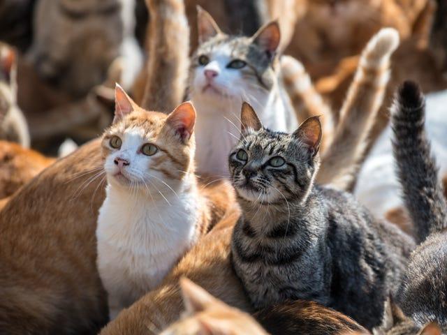 En 14-årigs schizofreni-liknande psykos kan ha orsakats av kattbakterier