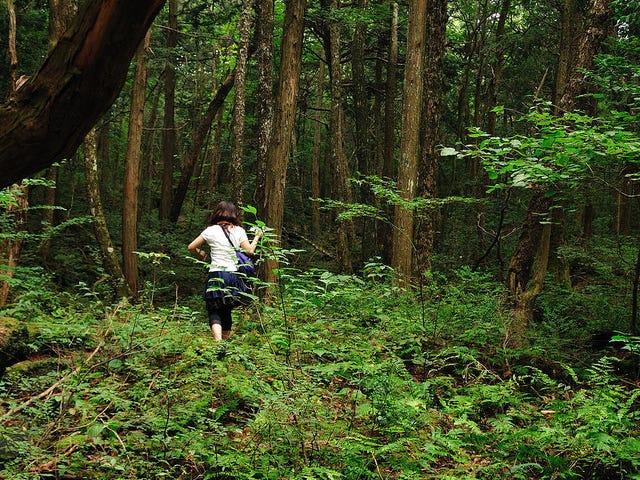 """Un youtuber graba un cadáver en Aokigahara, el bosque de los suicidios japónes: """"No lo hice por las visitas"""""""