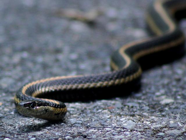 Finne en slange i huset ditt: Kotaku-gjennomgangen