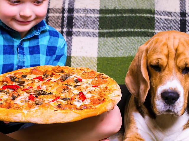 Dog who started fire after stealing pizza is still a good dog