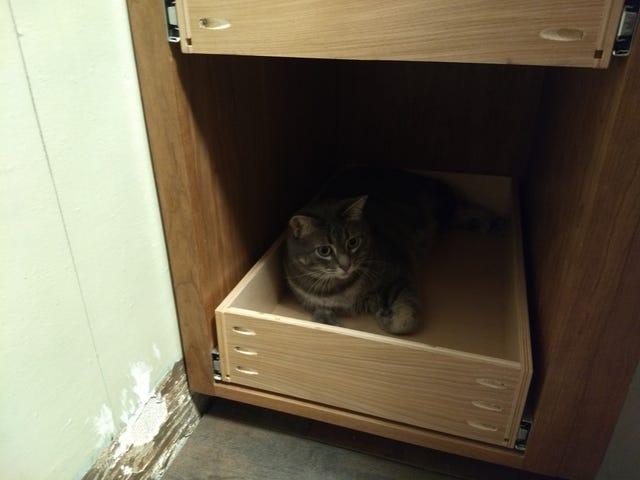 Cat. In a cabinet.