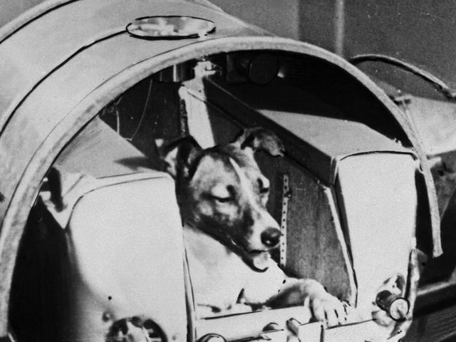Here's to the Brave Laika, Who Became the First Doggonaut 60 Years Ago Today