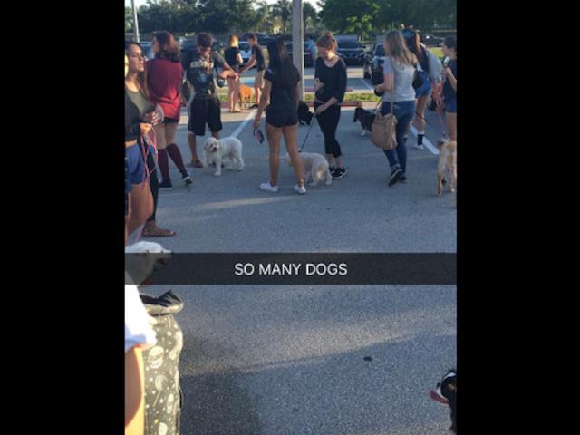 हाई स्कूल पार्किंग लॉट आराध्य वरिष्ठ शरारत में एक कुत्ता पार्क बन जाता है