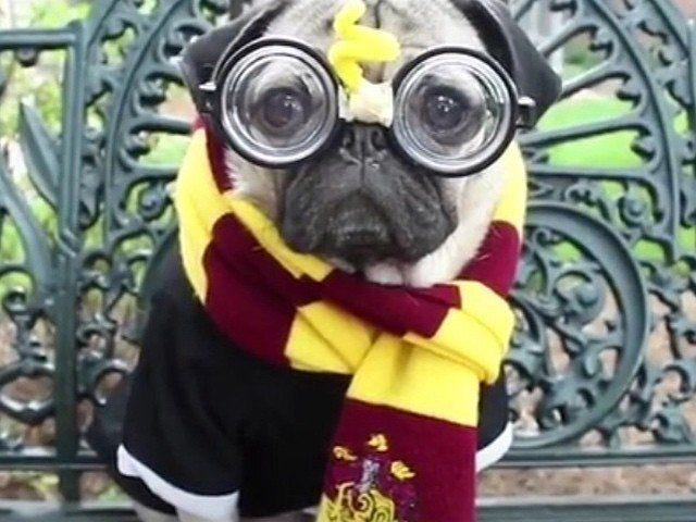 Pawgwarts: The Sorting Hat for Shelter Dogs