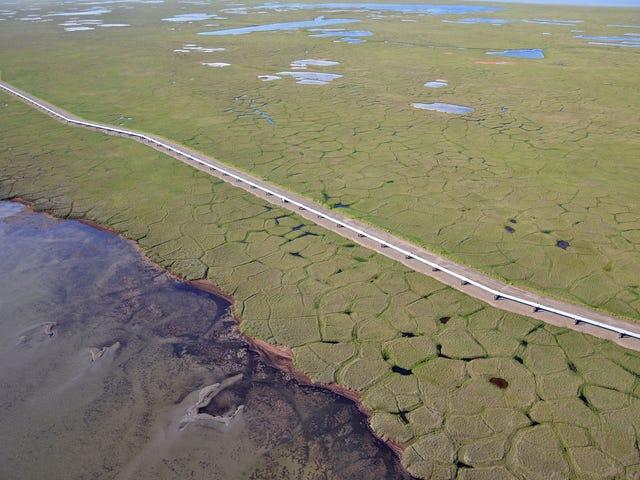 Un oléoduc suspendu au-dessus de la toundra en fusion de l'Alaska