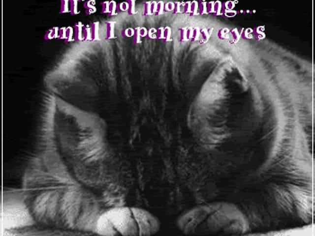 Shhh!  Estoy durmiendo (no realmente)