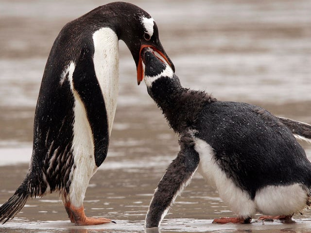 Penguins May Have Discovered the Key to Domestic Bliss
