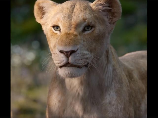 Everyone Be Quiet, Lion Beyoncé Is Talking!