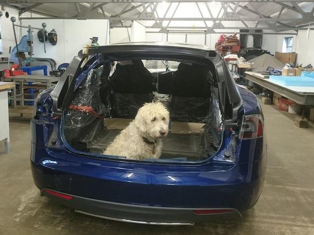 Doggo er ikke en fan