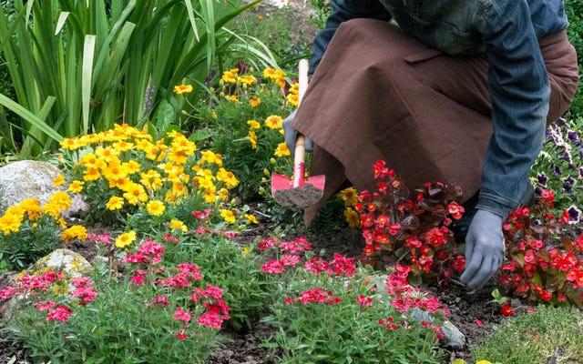 秋の庭を植える方法(そしてそれを行うのに最適な時期)