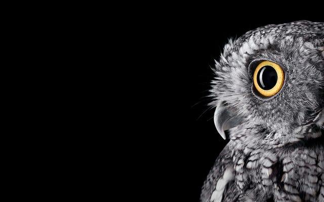 これらの異常に親密なフクロウの肖像画に驚嘆する瞬間を取ります
