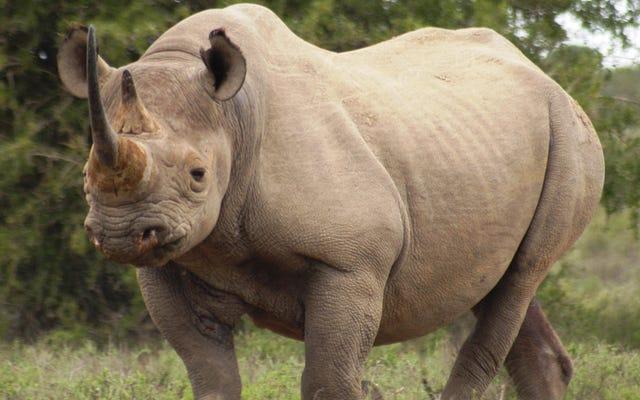 L'effondrement de grands herbivores peut conduire à des «paysages vides» dans le monde