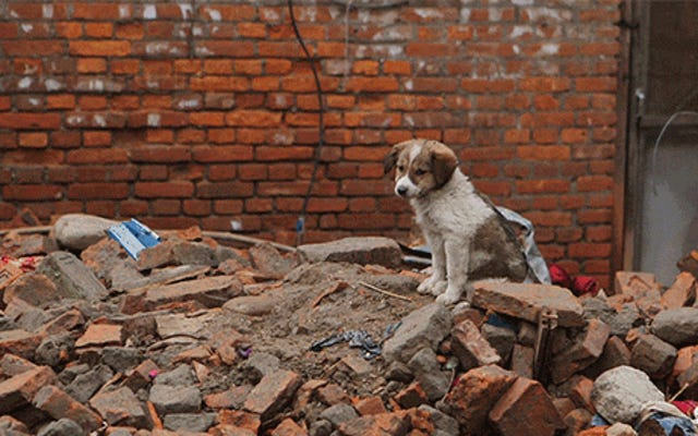 Court documentaire: ce que c'est que d'être au Népal après le tremblement de terre