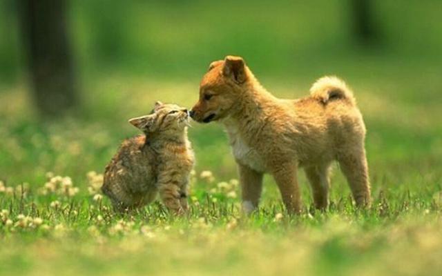 """Los animales son ahora """"seres sensibles"""" según la ley de Nueva Zelanda"""