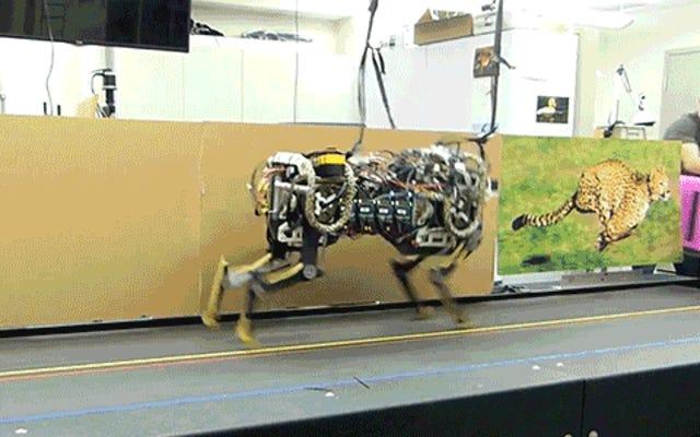 เสือชีตาห์หุ่นยนต์ของ MIT กระโดดขณะวิ่ง ดังนั้นกำแพงจึงไม่ปกป้องคุณ