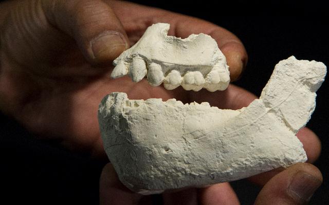 人類学者はまったく新しい人間の祖先を発見しました