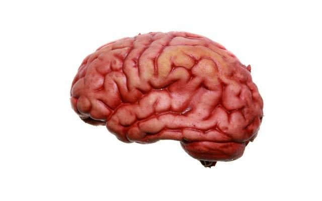 Plemię papuaskie, które zjadło mózgi, rozwinęło odporność na niektóre choroby mózgu