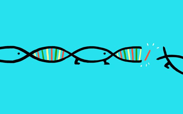 A expectativa de vida limitada é uma adaptação evolucionária?