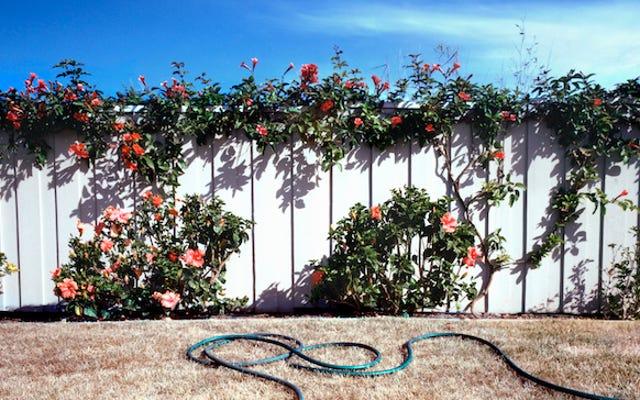 Les riches Californiens sont assez sûrs que les restrictions d'eau ne s'appliquent pas à eux