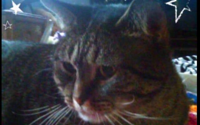 イザベルはリンバーバット・マッカビンズ、猫、大統領を支持する