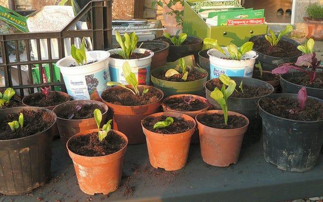 नेस्टेड और गैर-छिद्रपूर्ण बर्तनों के साथ अपने बगीचे में पानी बचाएं