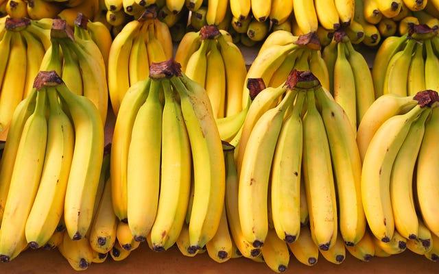 กล้วยจะสูญพันธุ์หรือไม่?