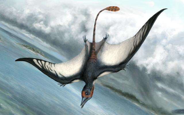Pterodactyls không phải là khủng long. Vậy họ là cái quái gì?