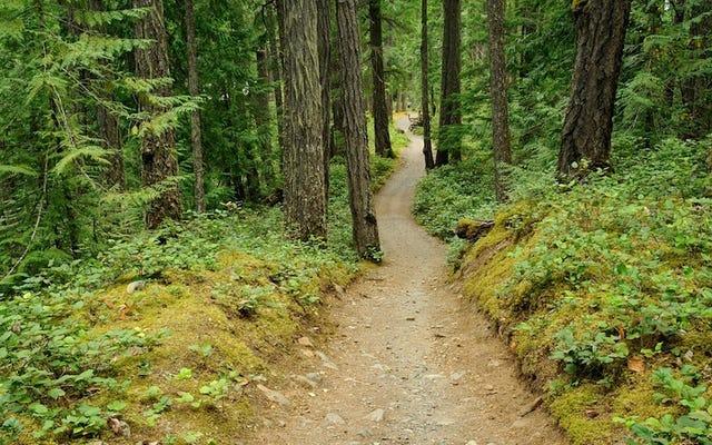 カップルは最初のデートで森の中で迷子になり、空輸されなければなりません